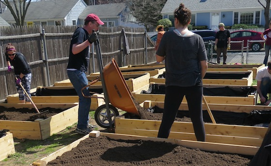 The gardeners toiled for soil as they loaded mulched dirt into the raised beds Saturday.
