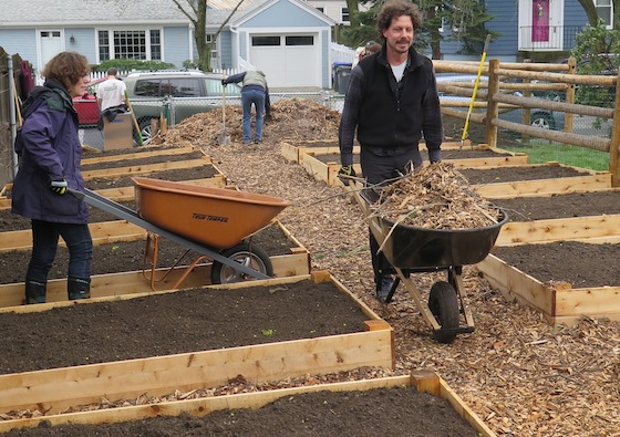 Wheelbarrows and muscles were used to get mulch onto the garden paths.