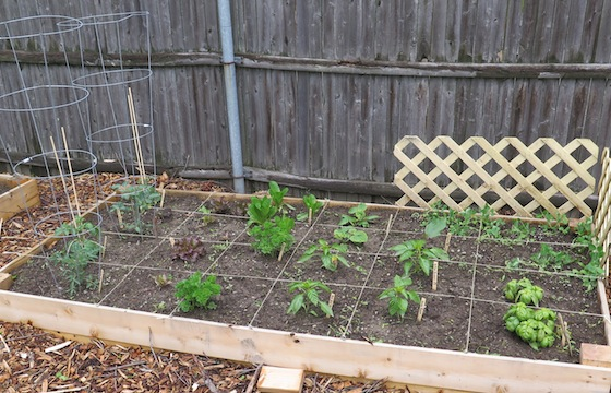 Despite overnight temperatures in the 40s, herbs and vegetables are growing in the raised beds of the community plots.